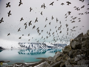 birds_flying_above_lake_great_national_geographic_landscape-1024x768